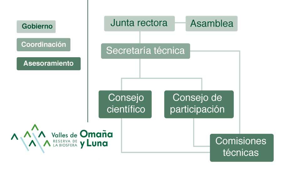 Gráfico de organización