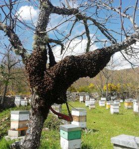 Miel de Luna abeja